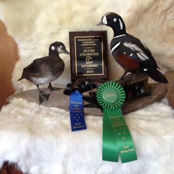 Matt Klope 1st Place Pair of Harlequin Ducks - 2016 Washington State Taxidermy Association Waterfowl Division
