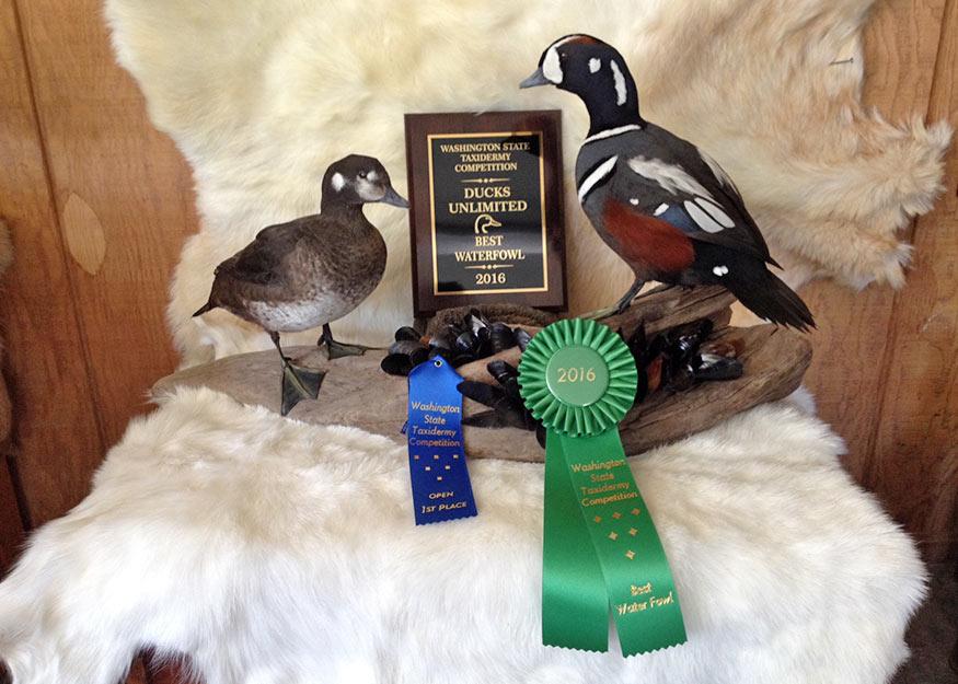 Best Waterfowl Award