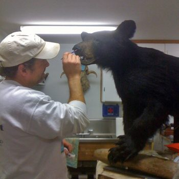 Matt Klope Paints a Black Bear - Whidbey Island Taxidermy