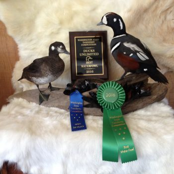 Matt Klope 1st Place Pair of Harlequin Ducks - 2016 Washington State Taxidermy Association Waterfowl Division