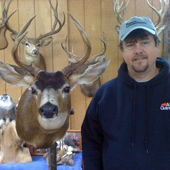 Whidbey Island Black Tail Deer - Whidbey Island Taxidermy