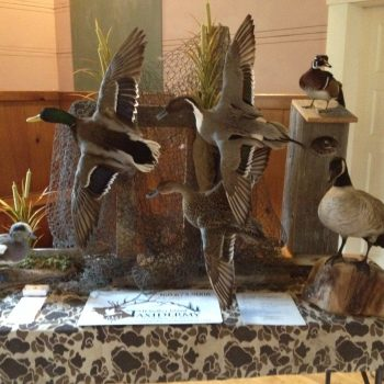 1st Place Waterfowl Display at the Annual Washington Waterfowl Association Banquet