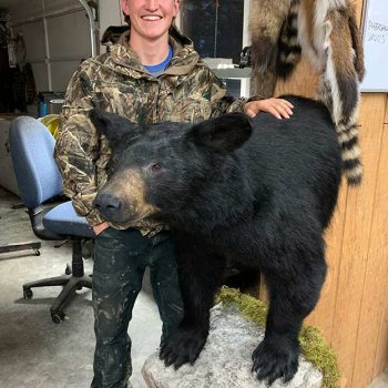 Black Bear - Whidbey Island Taxidermy