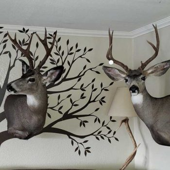 Mule Deer Taxidermy - Whidbey Island Taxidermy